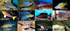 坦噶尼喀湖慈鲷的亚群体(Sub-Group)分类