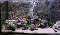 岩石型(中型-岩栖缸)