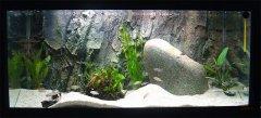 岩石-水草型(中型-小型三湖慈鲷缸和岩栖缸)