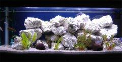 岩石-水草型(大中型-岩栖缸)