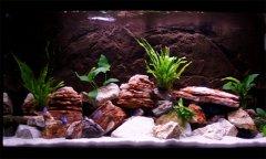 岩石-水草型(小型-岩栖缸)