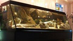 岩石型(大型-岩栖梯形缸)
