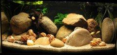岩石-水草-贝壳型(中型-空缸)