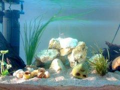 岩石-水草-贝壳型(小型-空缸)
