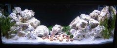 岩石-水草-贝壳型(大中型-空缸)
