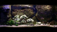 岩石-水草-贝壳型(中型-狐狸、卷贝混养缸)