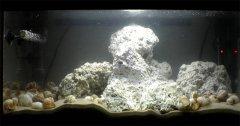 贝壳-岩石型(中型-空缸)