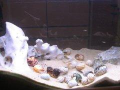 贝壳-岩石型(小型-空缸)