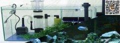 三湖慈鲷的过滤系统