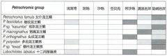 坦鲷饲养系列17:龙王鲷类(Petrochromis group)