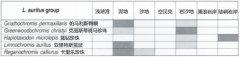 坦鲷饲养系列19:亚里特斯蓝波类(L. auritus group)